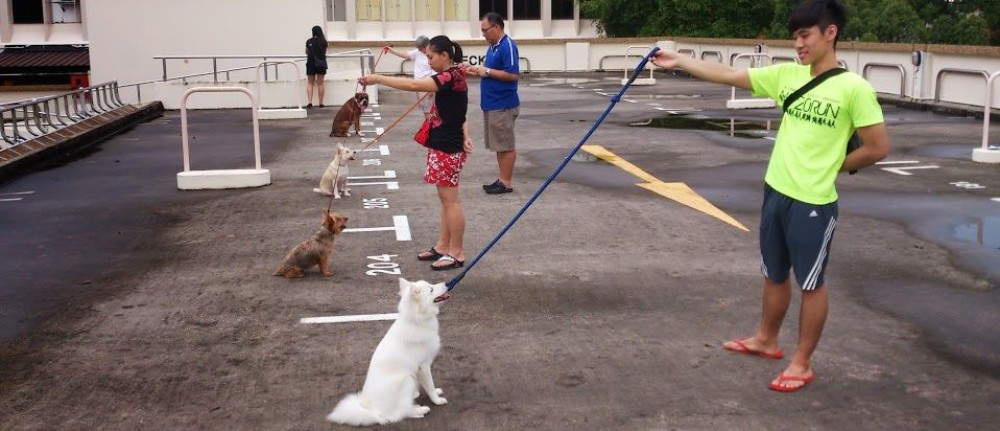 Why is Obedience Training necessary?